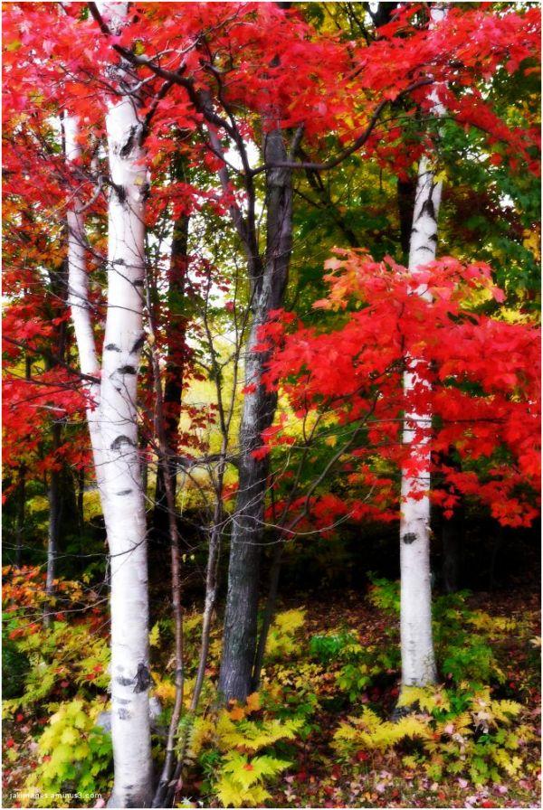 Couleurs de l'automne au Québec