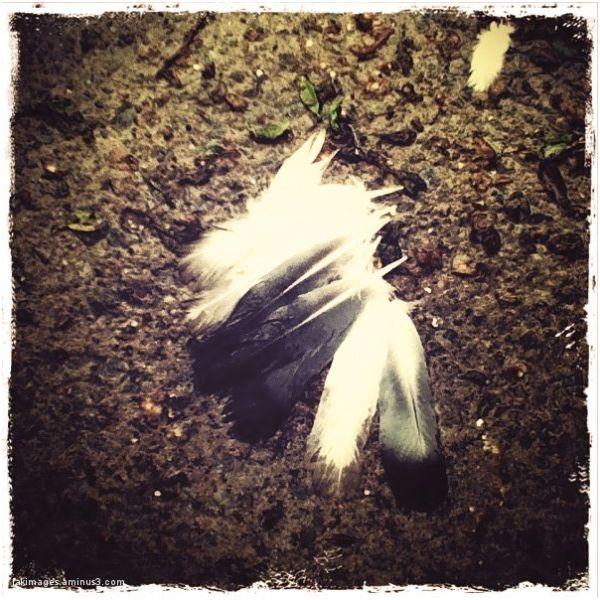 Les plumes sur l'asphalte