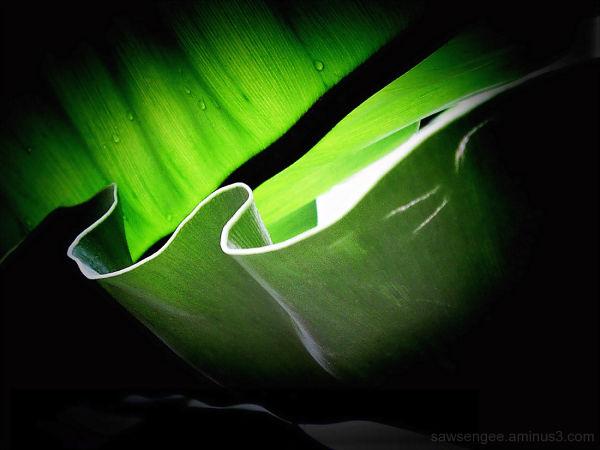 ribbons of green