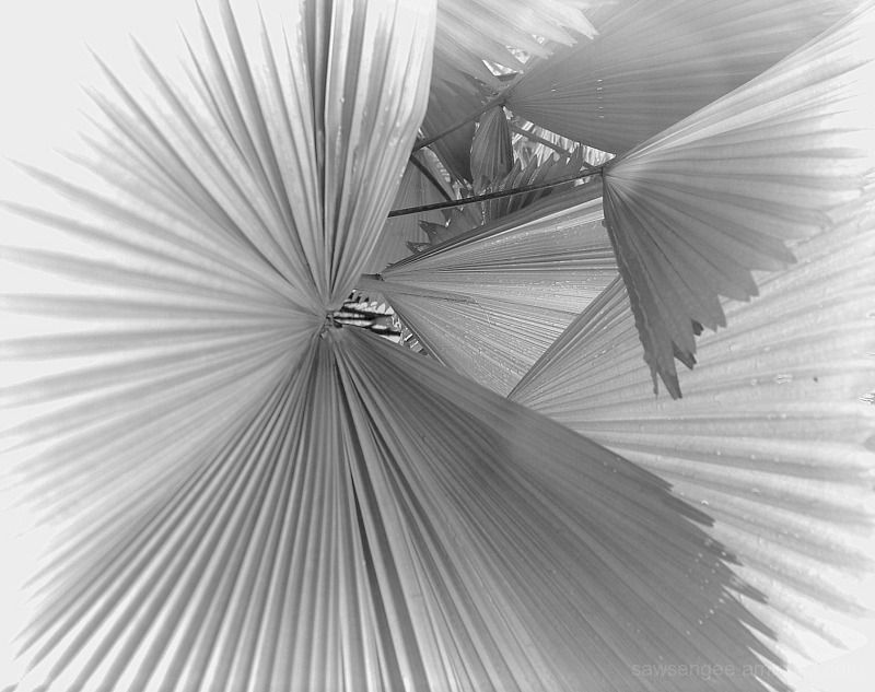 leaf pleats
