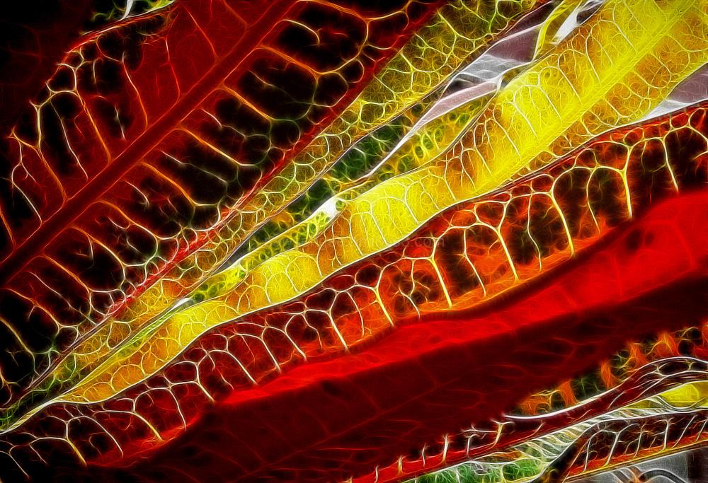 croton multi-coloured fractalius filter