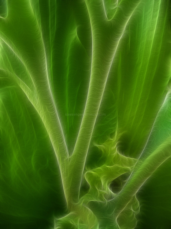 stag horn ferns fractalius filter