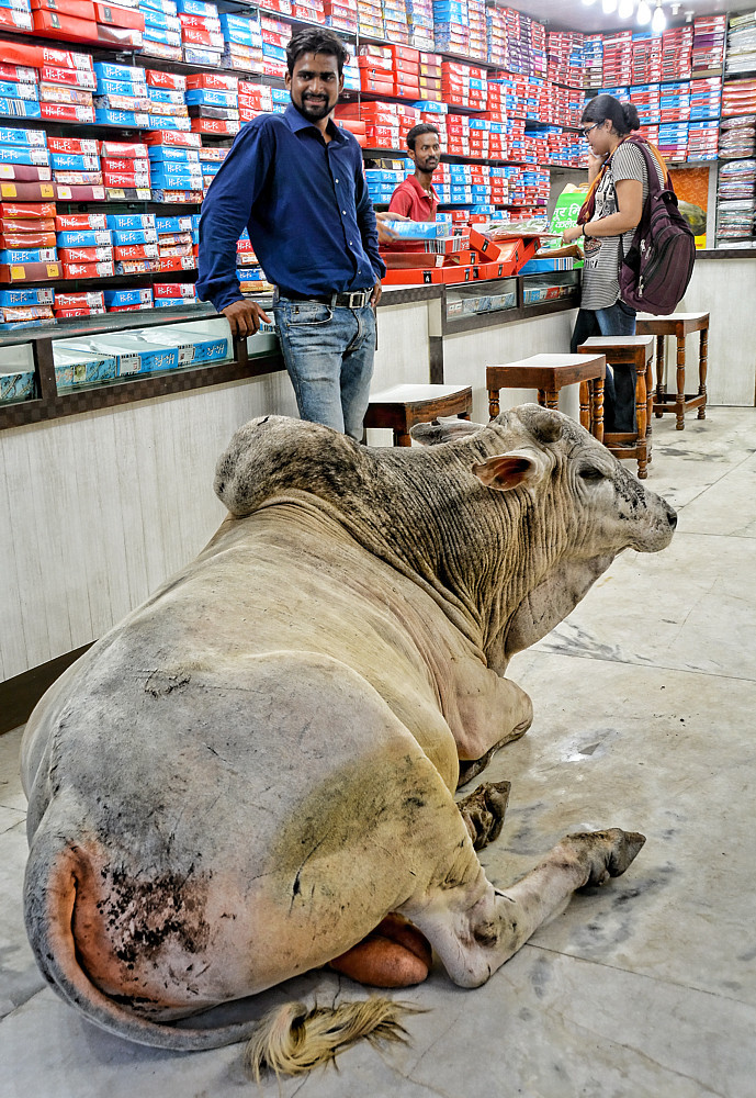 bull shop Varanasi India