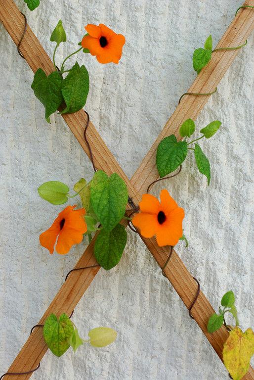 flower climbing