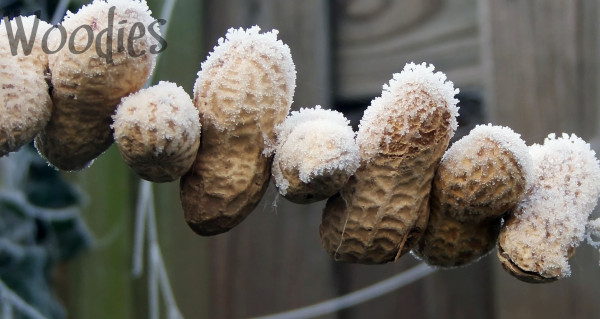 peanuts in winter