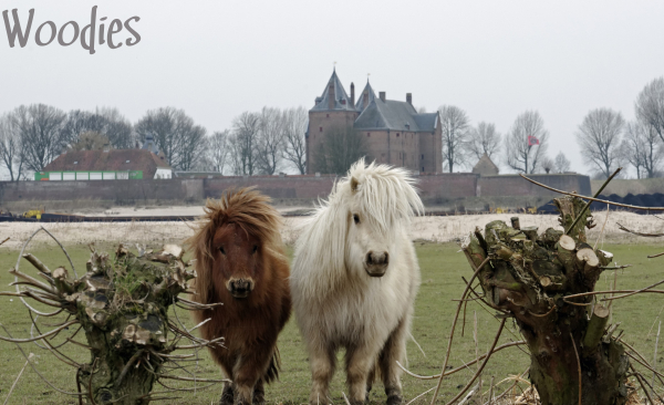 Ponys outside castle Loevestein