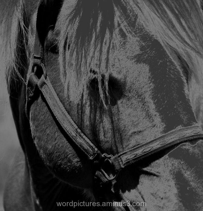 Questioning My Equestrian
