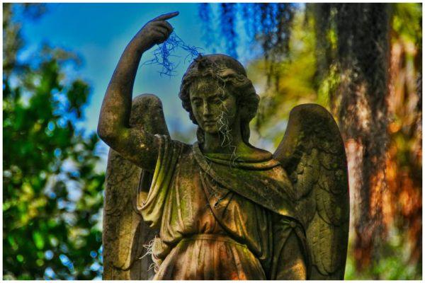 moss angel