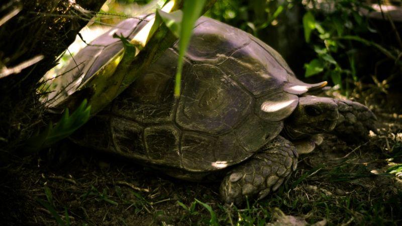 Rare species of turtle
