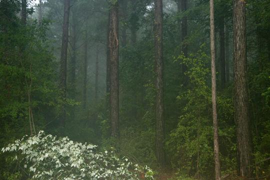 LA forest