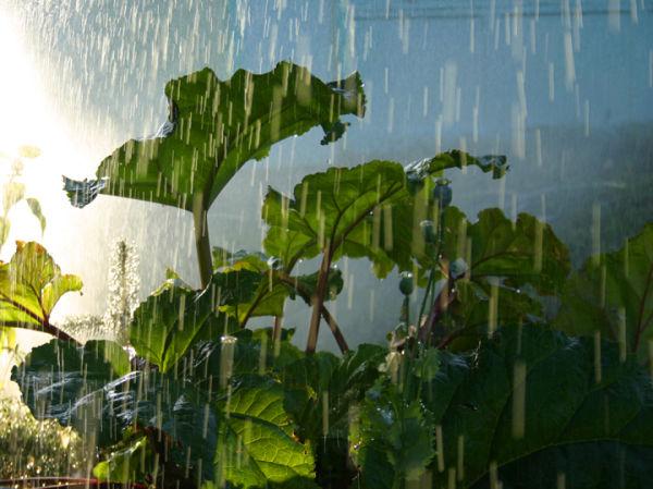 watering the yard