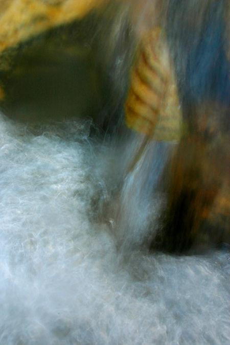 mill creek leaf