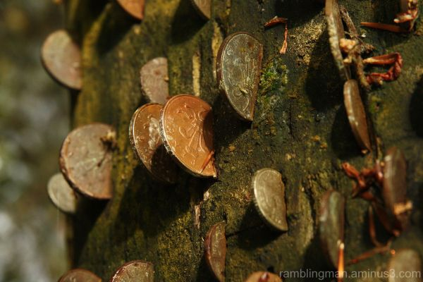 Coin Tree at St Nectans Glen