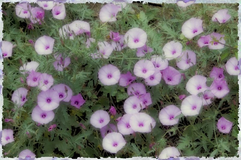 Postales de Primavera - 3