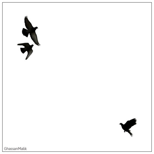 Sky,Iraq,Birds