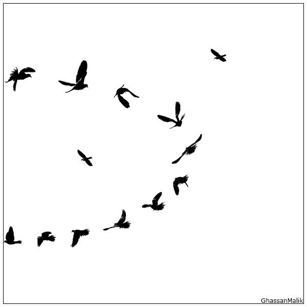 Iraq,Birds,,White,iraq,sky