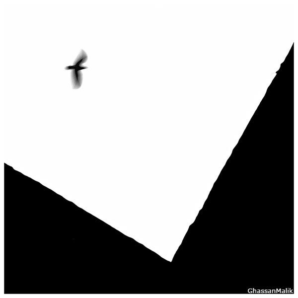 Iraq,Birds,,White,black,iraq,sky