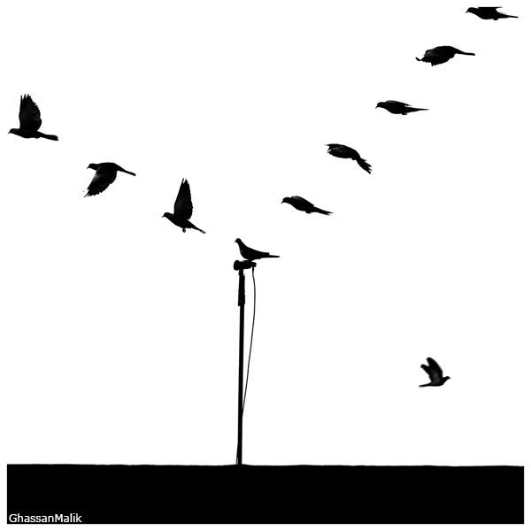 iraq birds sky plane helicopter white apache