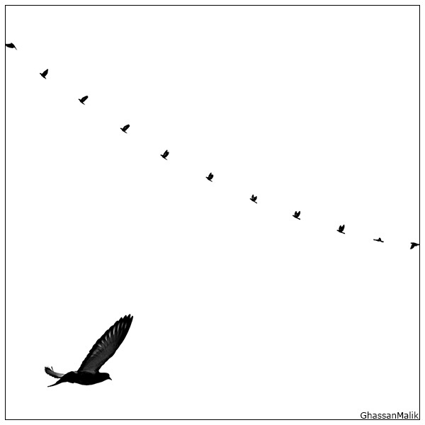 iraq birds sky plane white