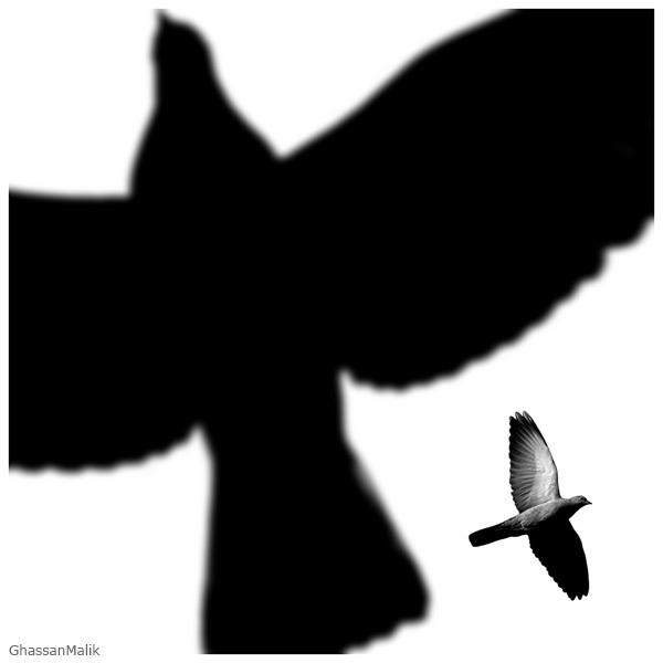 Birds_12