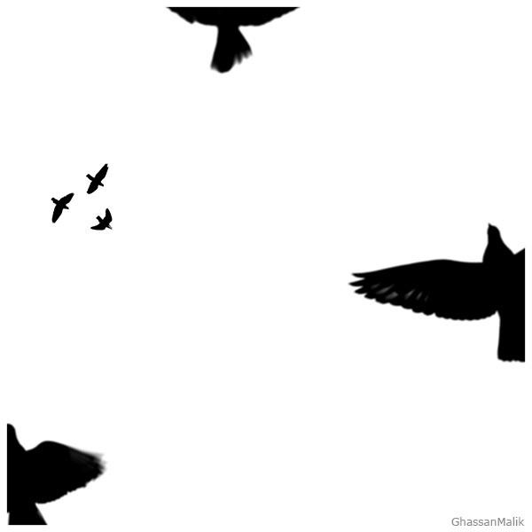 iraq birds sky white
