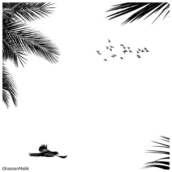iraq birds sky plane helicopter white