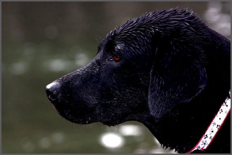 Wet Dog: Day 41