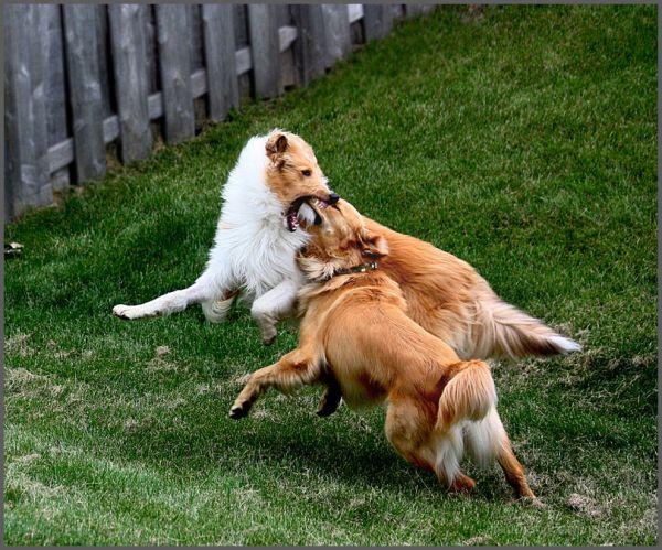 It's a Dog Eat Dog World: Day 106