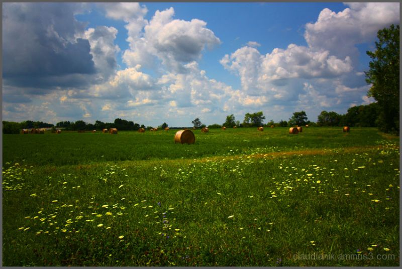Rollin' the Hay: Day 115