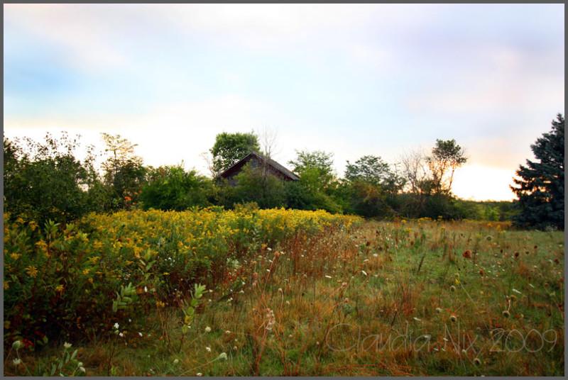 Farm at Sunrise: Day 139