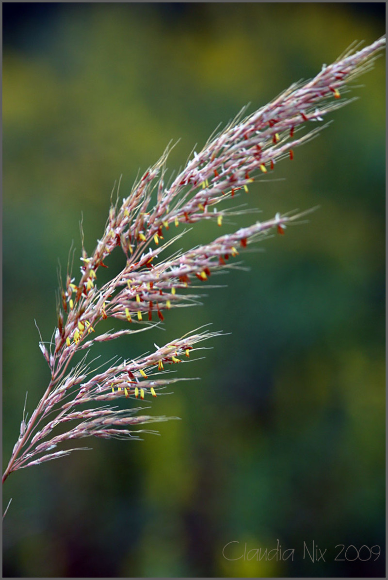 Wheat: Day 142
