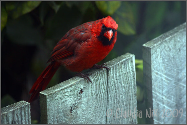 Same Fence, Different Bird~Image 2:Day 161