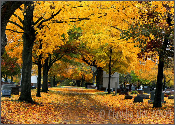 Golden Graveyard: Day 175