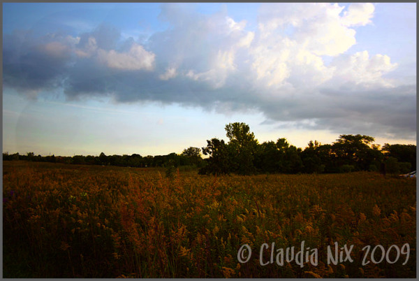 Rustic Field: Day 183