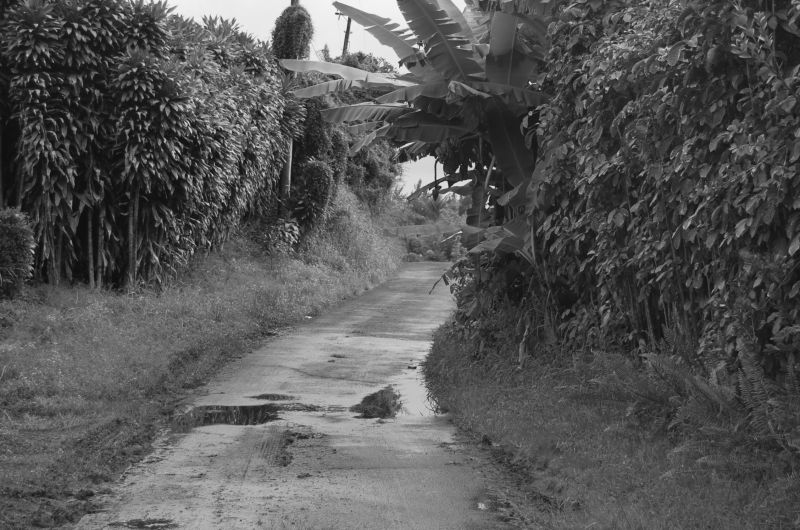 Mosquito Path