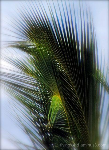 dancing palm