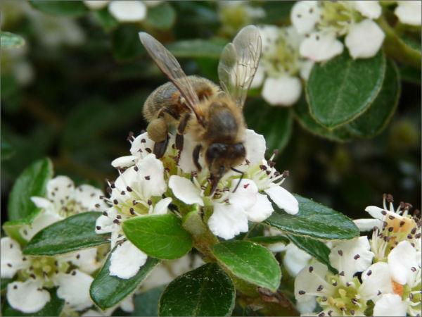 Envie  de miel ?