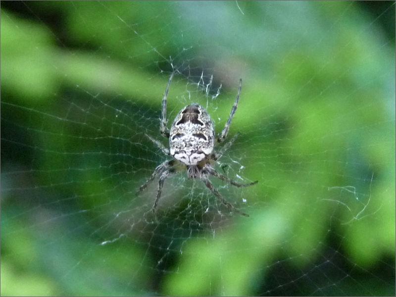 Le masque de l'araignée