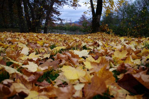 Soldes d'automne : couettes couleurs soleil