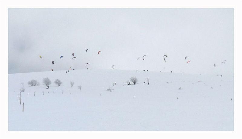 Papillons des neiges