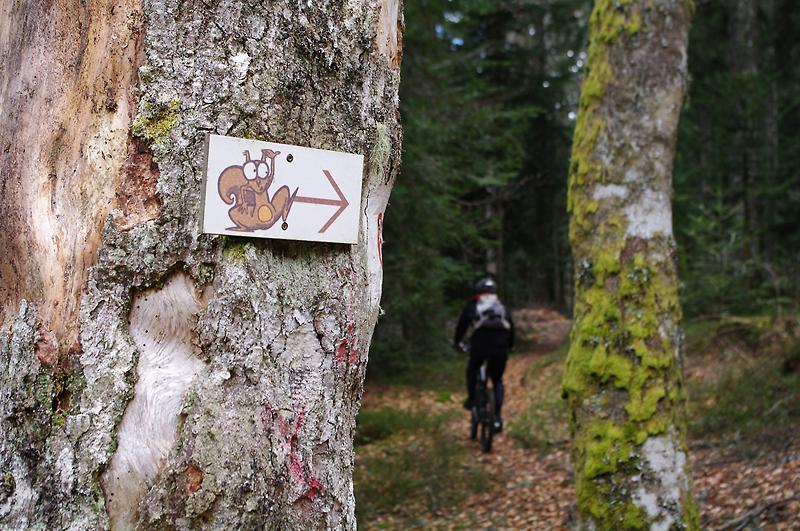 Suivre l'écureuil...