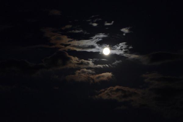 L'oiseau Lune