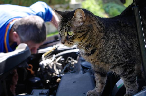 Mettre un tigre dans son moteur