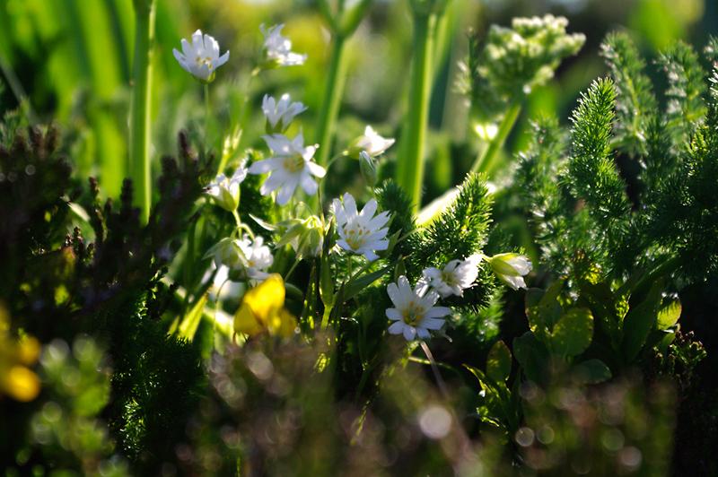 Un petit monde en vert tendre
