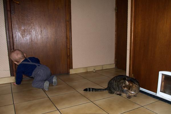 Hep ! petit homme, si tu essayais ma chatière !
