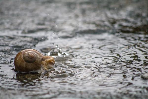 Beau temps pour les escargots