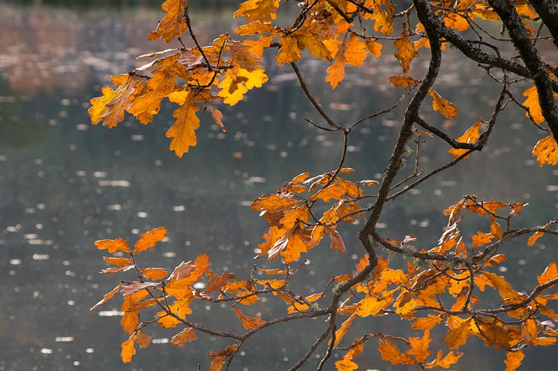 Lumière d'automne (2)
