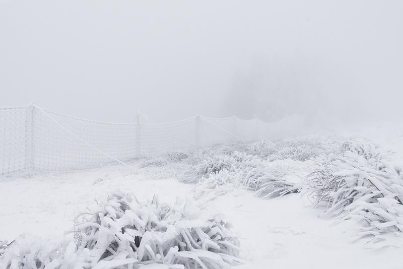 Dans les filets de l'hiver...