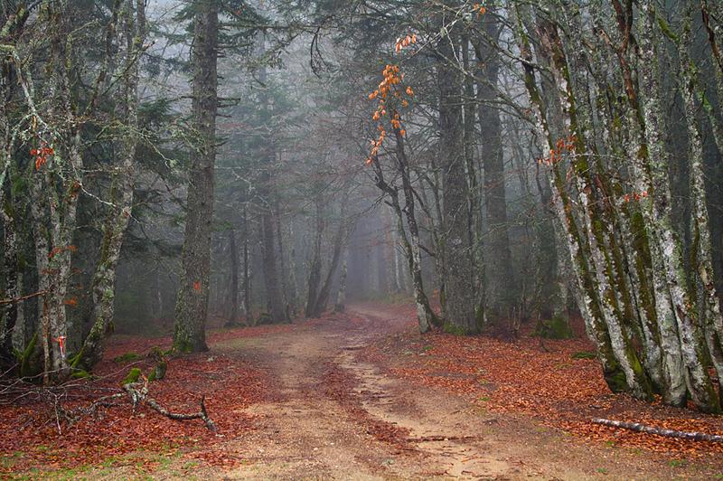 La forêt des brumes