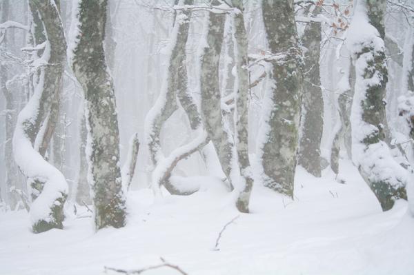 La forêt enrobée de silence